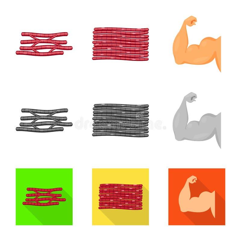 Objet d'isolement de fibre et de symbole musculaire Placez de l'illustration de vecteur d'actions de fibre et de corps illustration de vecteur