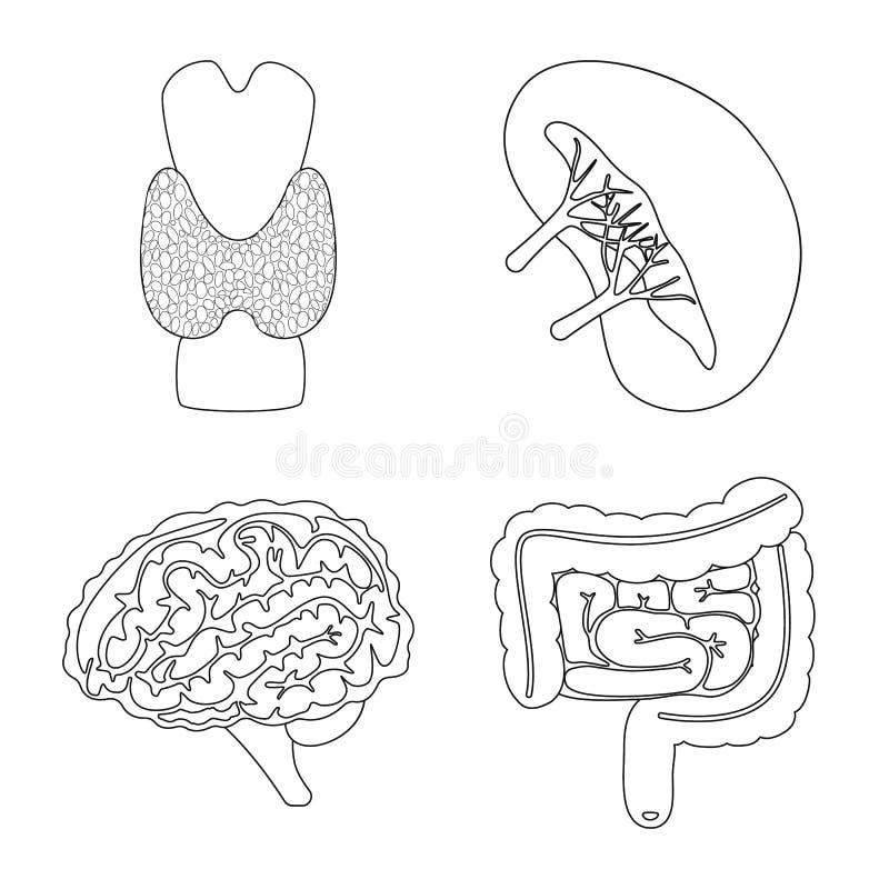 Objet d'isolement de logo d'anatomie et d'organe Placez de l'anatomie et de l'illustration courante m?dicale de vecteur illustration libre de droits