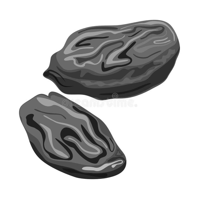 Objet d'isolement de raisin sec et de symbole sec Placez de l'icône de vecteur de raisin sec et de tas pour des actions illustration stock