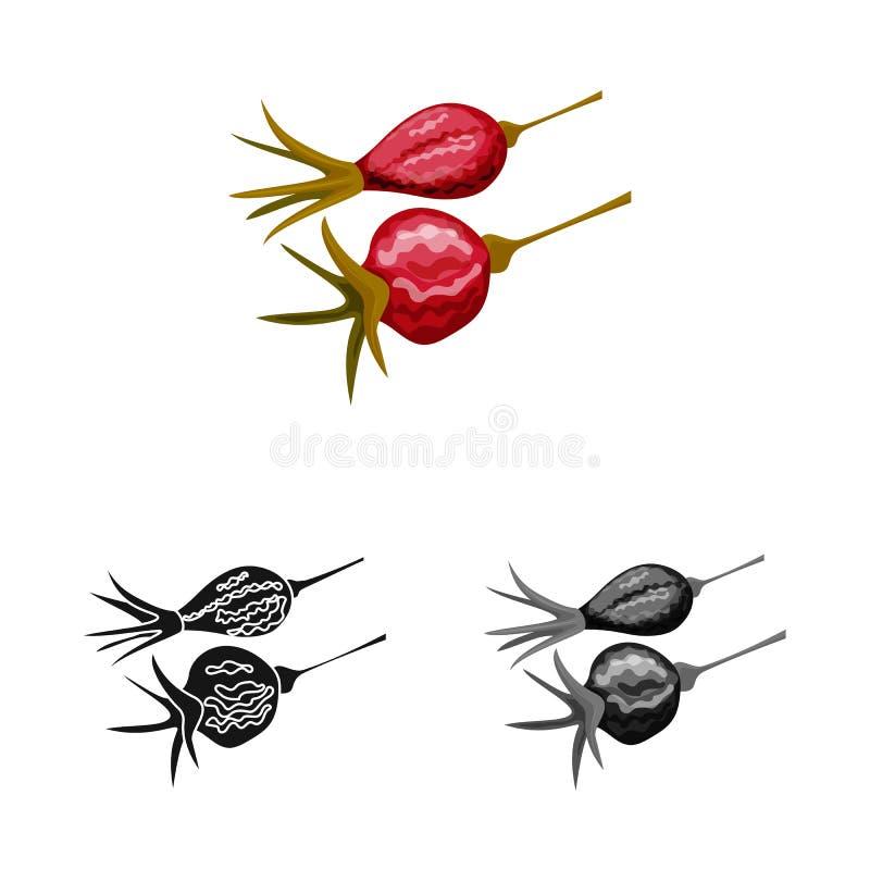 Objet d'isolement de rose et de logo sec Collection de rose et icône de vecteur de botanique pour des actions illustration stock