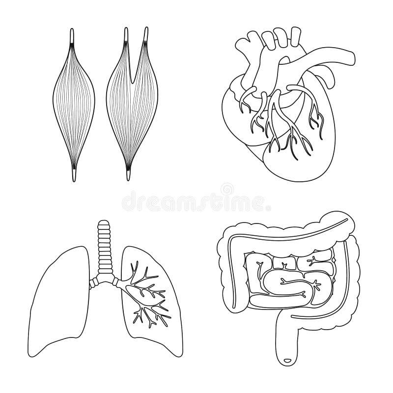 Objet d'isolement de symbole d'anatomie et d'organe Collection de l'anatomie et de l'illustration courante m?dicale de vecteur illustration libre de droits