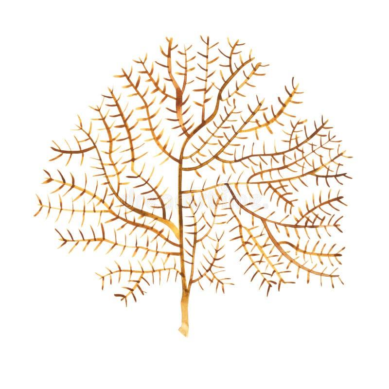 Objet de vie marine d'algue sur le fond blanc Illustration peinte tirée par la main d'aquarelle Aquarelle sous-marine illustration libre de droits