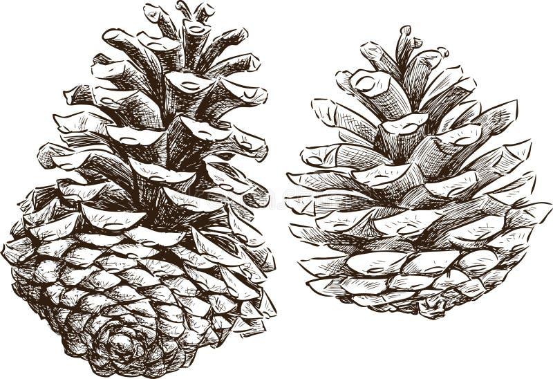 Objet du pin Cones illustration libre de droits