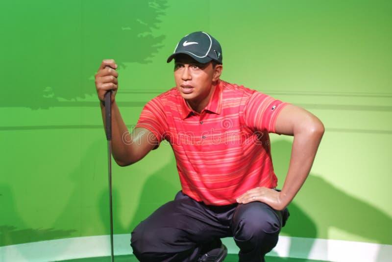 Objet exposé de figure de cire de Tiger Woods images stock