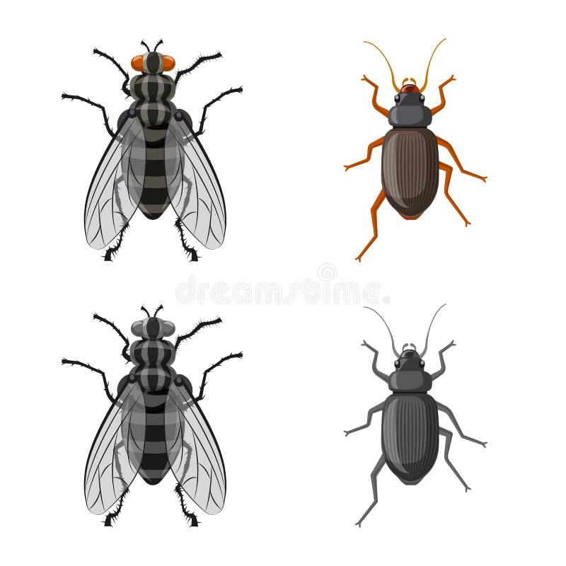 Objeto aislado de la muestra del insecto y de la mosca Sistema del icono del vector del insecto y del elemento para la acción ilustración del vector