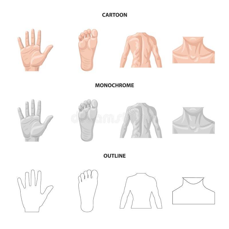 Objeto aislado de la muestra del ser humano y de la parte Sistema del icono del vector del ser humano y de la mujer para la acció stock de ilustración