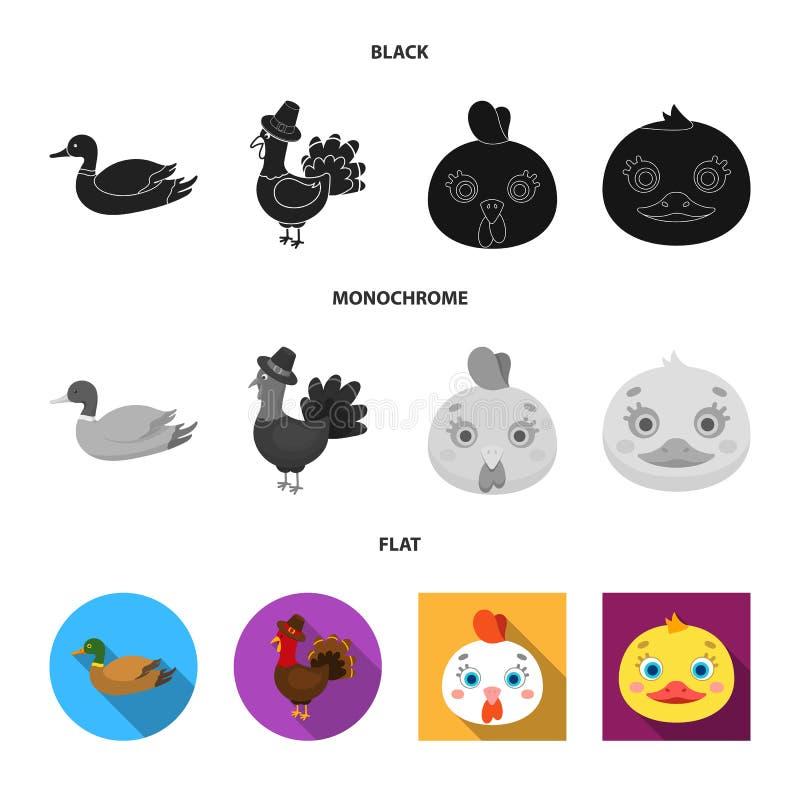 Objeto aislado de la muestra divertida y de las aves de corral Fije de divertido y del s?mbolo com?n de cultivo para la web stock de ilustración