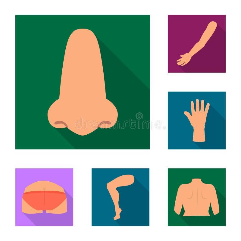 Objeto aislado del icono del cuerpo y de la parte Colección de icono del vector del cuerpo y de la anatomía para la acción ilustración del vector