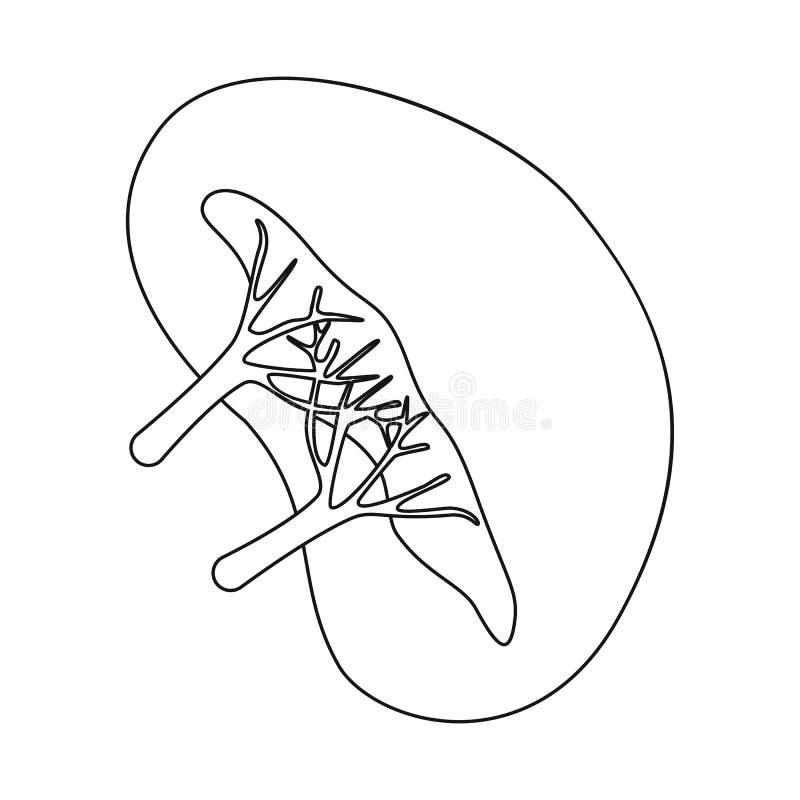 Objeto aislado del logotipo de la anatomía y del órgano Fije de la anatomía y del ejemplo común médico del vector ilustración del vector