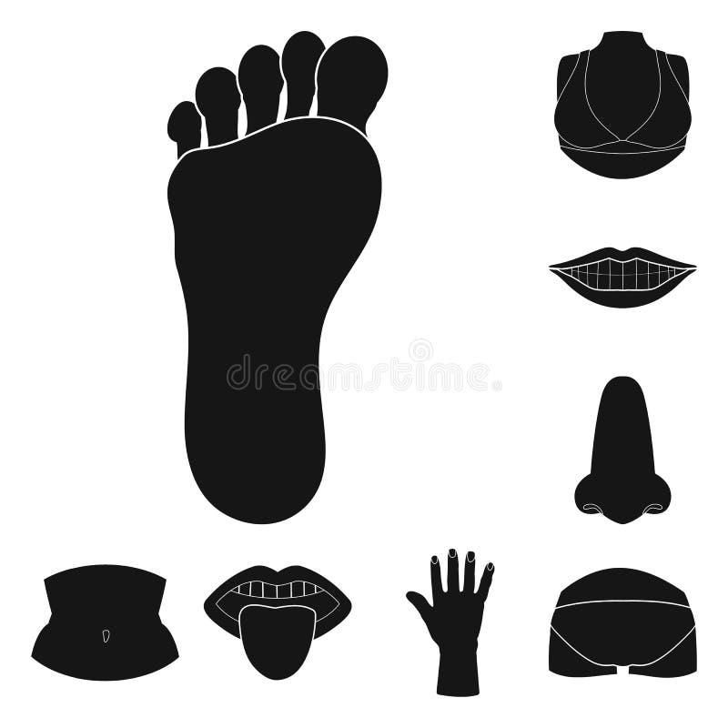 Objeto aislado del símbolo del cuerpo y de la parte Fije del icono del vector del cuerpo y de la anatomía para la acción libre illustration