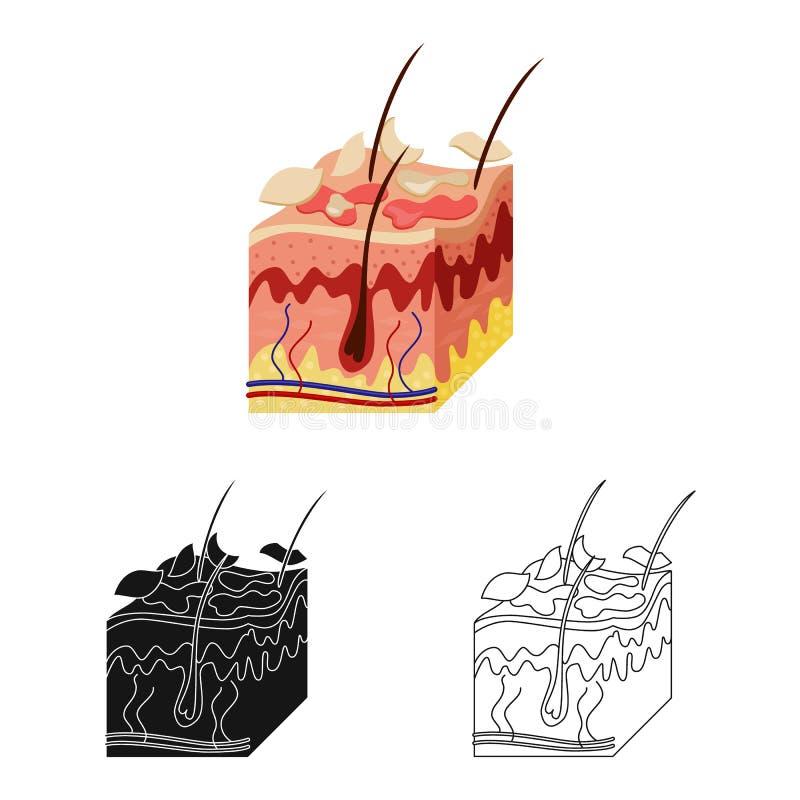 Objeto aislado del símbolo de la piel y de la epidermis Colección de símbolo común de la piel y del tejido para la web libre illustration