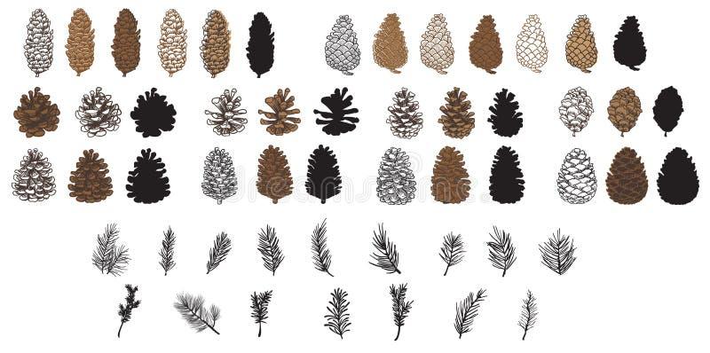 Objeto del pino Cones ilustración del vector