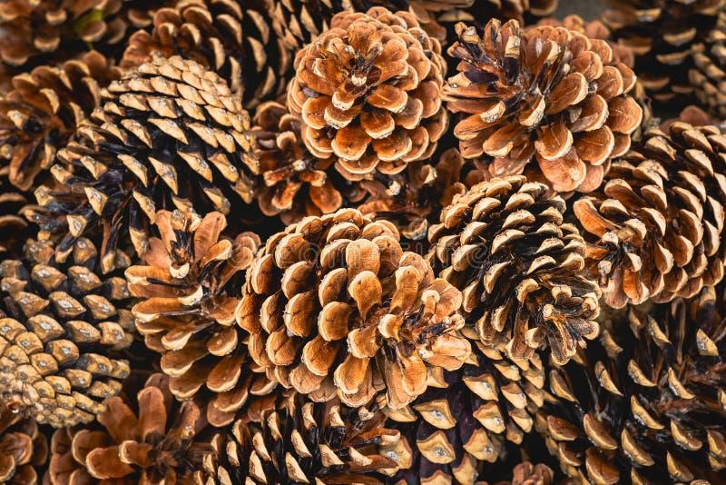 Objeto del pino Cones foto de archivo libre de regalías