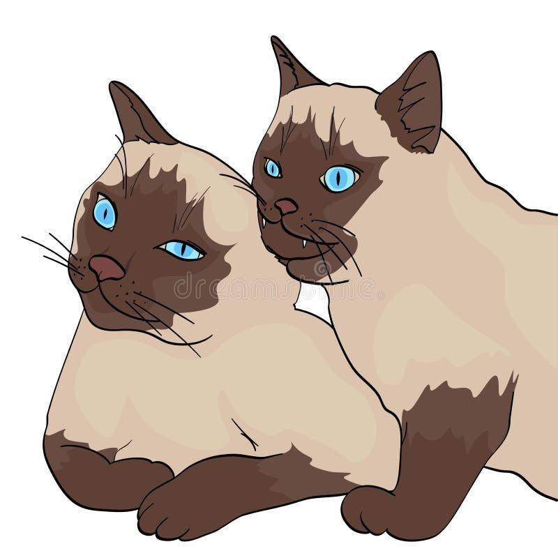 Objeto isolado no fundo branco, cor do verão Dois gatos, as mordidas animais as outro Raça Siberian, cor Neva ilustração do vetor