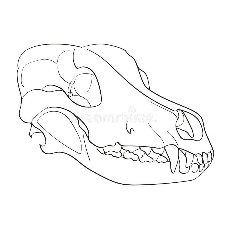 Objeto no cão branco do crânio do fundo lateralmente Coloração para crianças ilustração royalty free