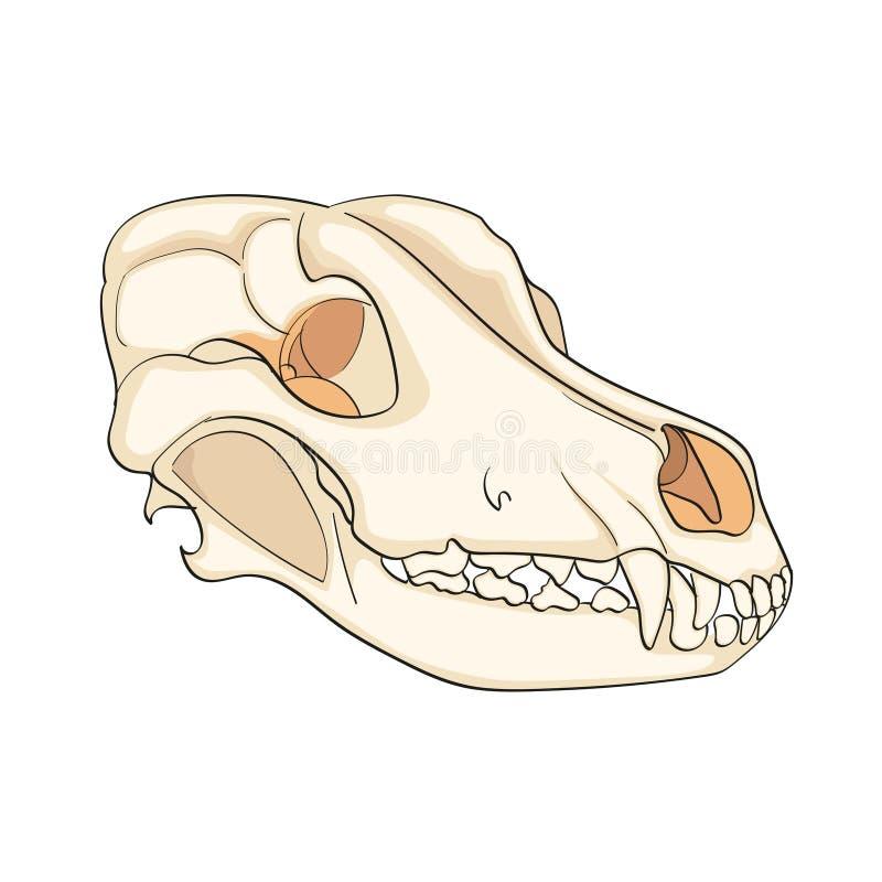Objeto no cão branco do crânio do fundo lateralmente Vetor do fundo da cor ilustração royalty free
