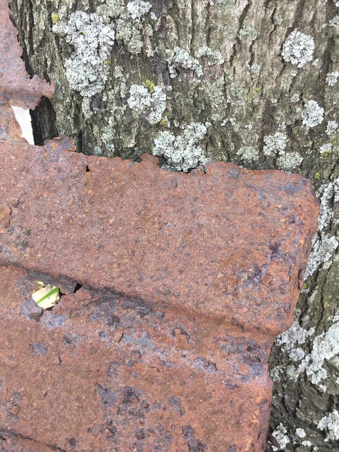 Objeto oxidado del metal contra fondo de la textura de la naturaleza del musgo de la corteza de árbol foto de archivo