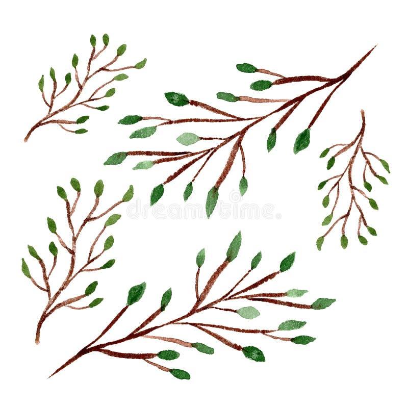 Objetos florais da aquarela ajustados Ramos do inverno isolados no fundo branco A mão tirada planta o clipart ilustração royalty free