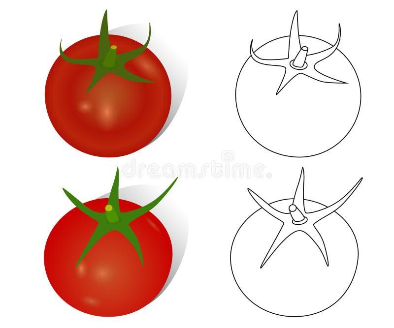 Objets de tomates, réalistes et contourné mûrs tirés par la main, dessin de vecteur illustration libre de droits