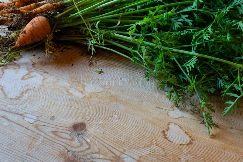 Oblique view of fresh baby carrots on a wood table, copy space royalty free stock photos