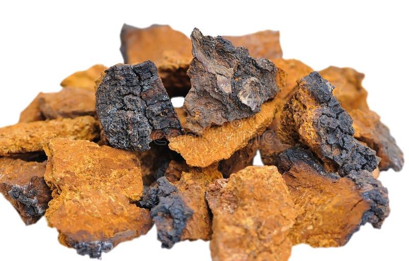 Obliquus stukken van Inonotus stock fotografie