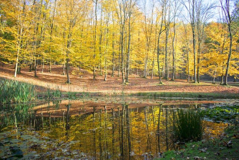 Obora Holedna - Брно стоковая фотография rf