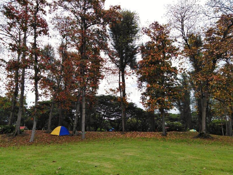 Obozować na trawie w jesieni zdjęcia royalty free