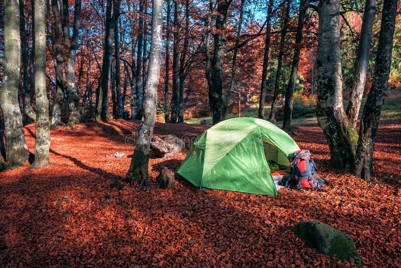 Obozować w jesień lesie zdjęcia stock