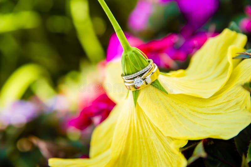 Obrączki ślubne na żółtym kwiacie obrazy royalty free
