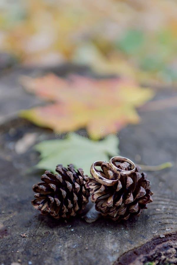 Obrączki ślubne na drewnianym tle z sosnowymi rożkami obraz royalty free