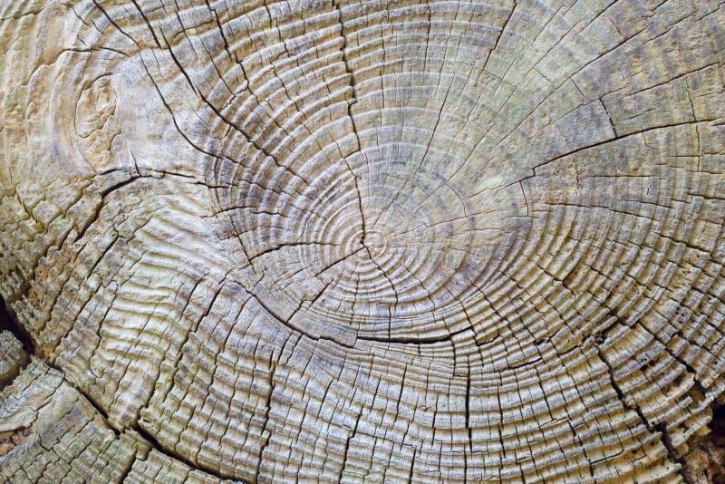 obrączki 1 drzew zdjęcie royalty free