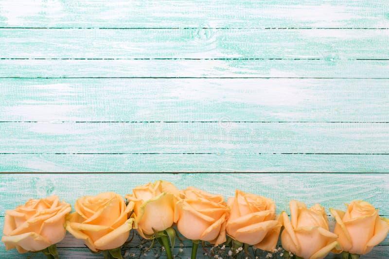 Obramia lub graniczy od brzoskwinia koloru róż kwiatów na turkusie wo zdjęcie royalty free