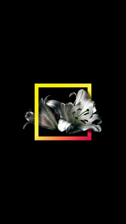 Obramiający kwiat zdjęcie royalty free