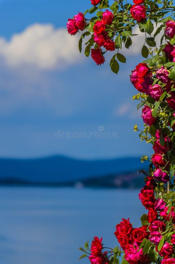 Obramiający z różami obraz royalty free