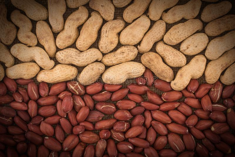 Obrany arachid na well arachidach zdjęcie royalty free