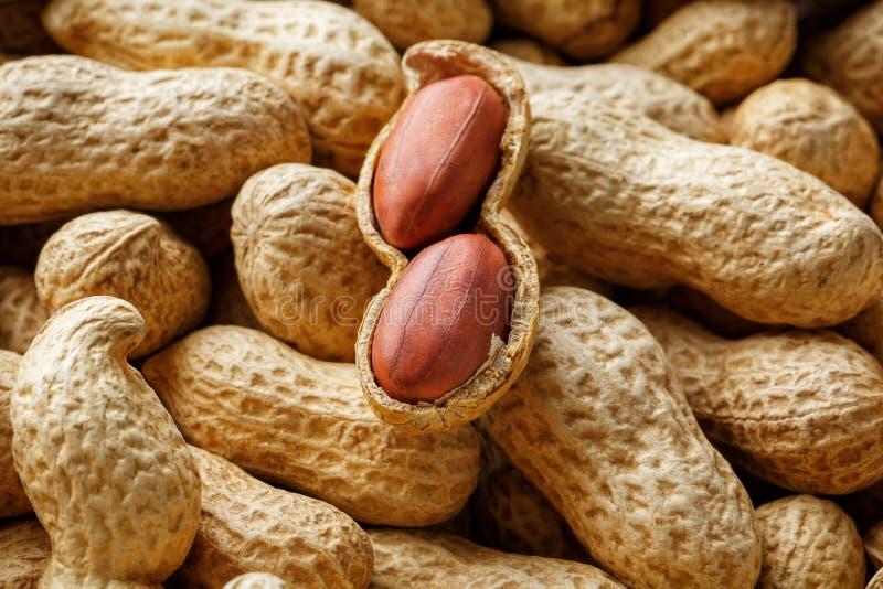 Obrany arachid na well arachidach Arachidy, dla tła lub tekstur zdjęcie royalty free