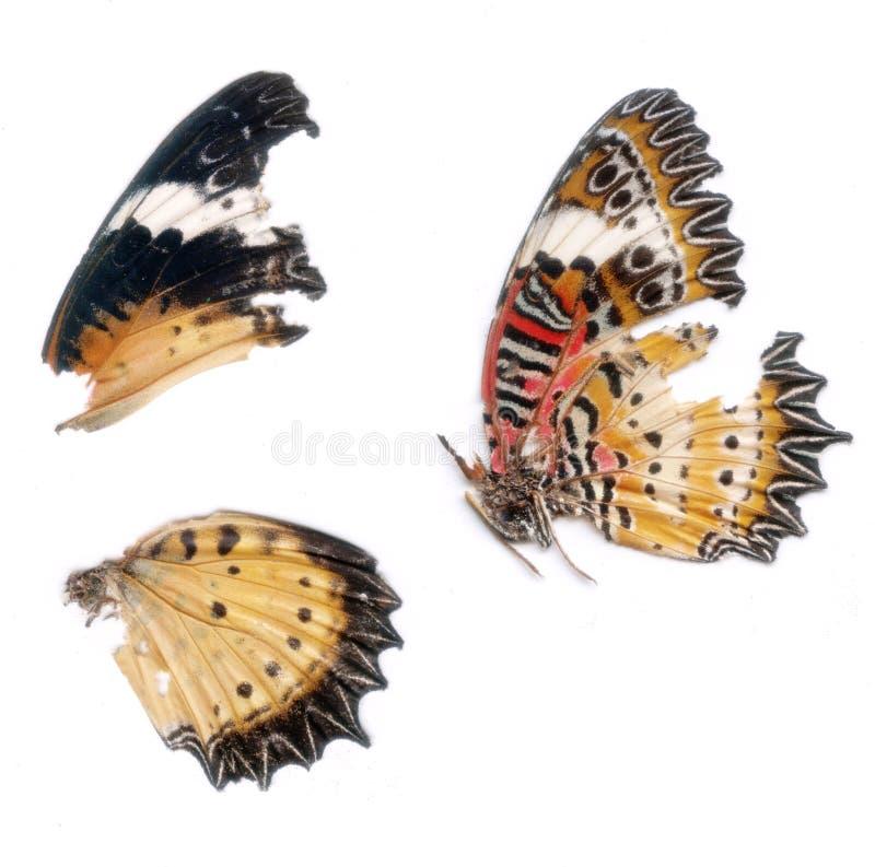 Obraz cyfrowy Motyli skrzydła zdjęcie royalty free