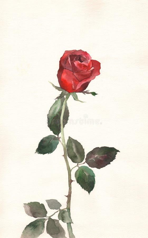 obraz czerwonej róży akwarela