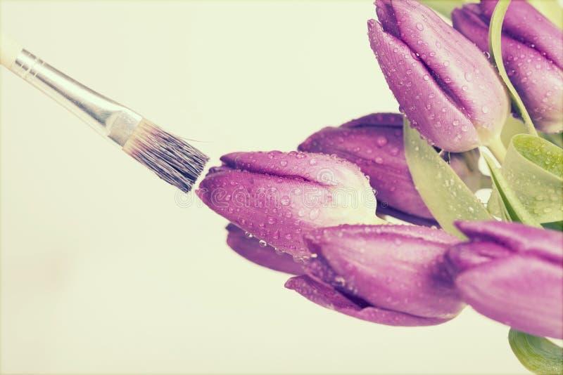 Obraz purpur tulipany zdjęcie stock