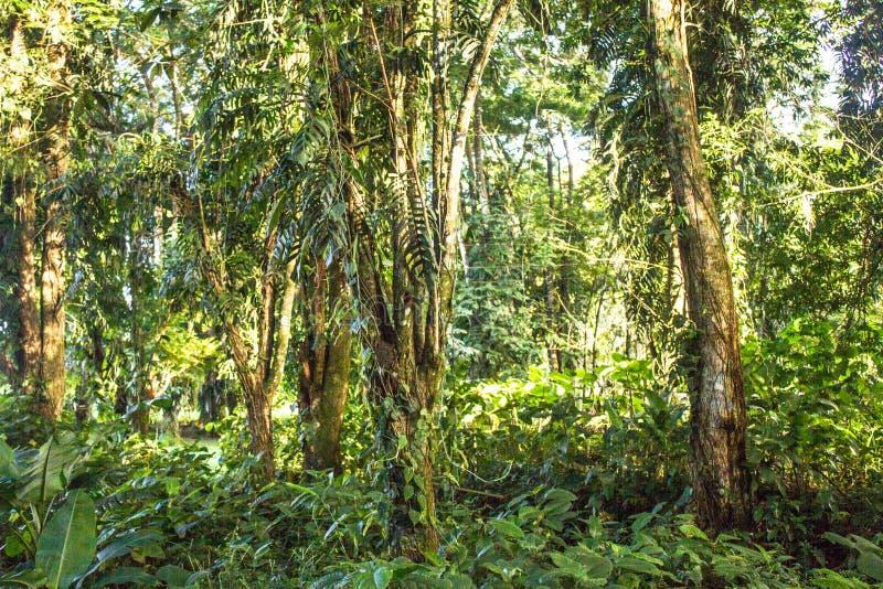 Obraz typowego lasu deszczowego zdjęcia royalty free