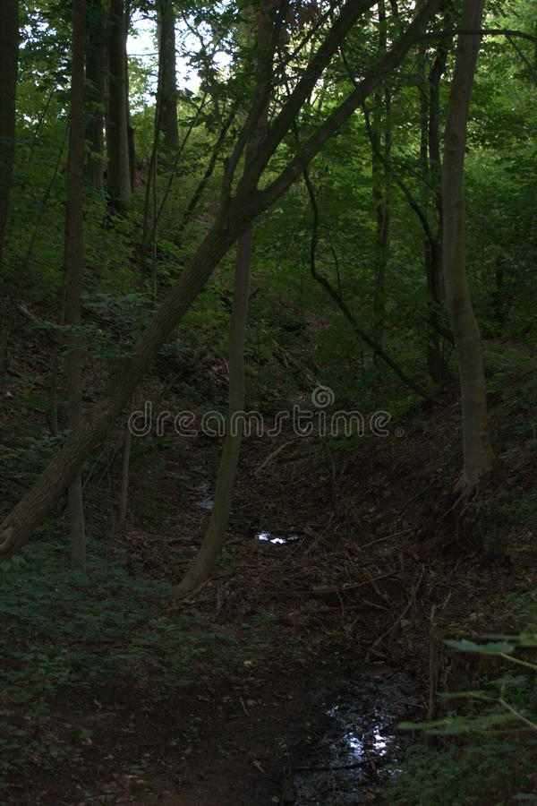 Obrazek drzewo który spadał i łapie na innej drzewnej pozyci obok małej lasowej zatoczki zdjęcie royalty free