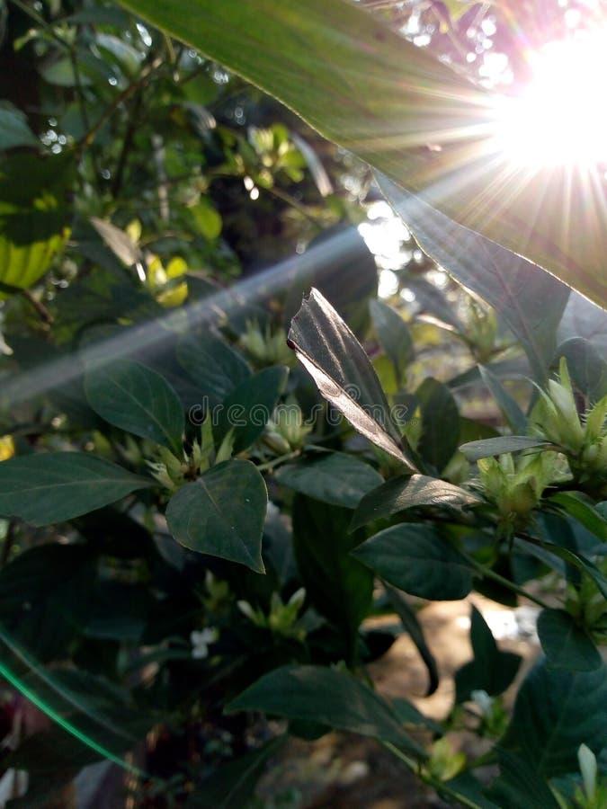 Obrazek lasowy powstający słońce fotografia stock