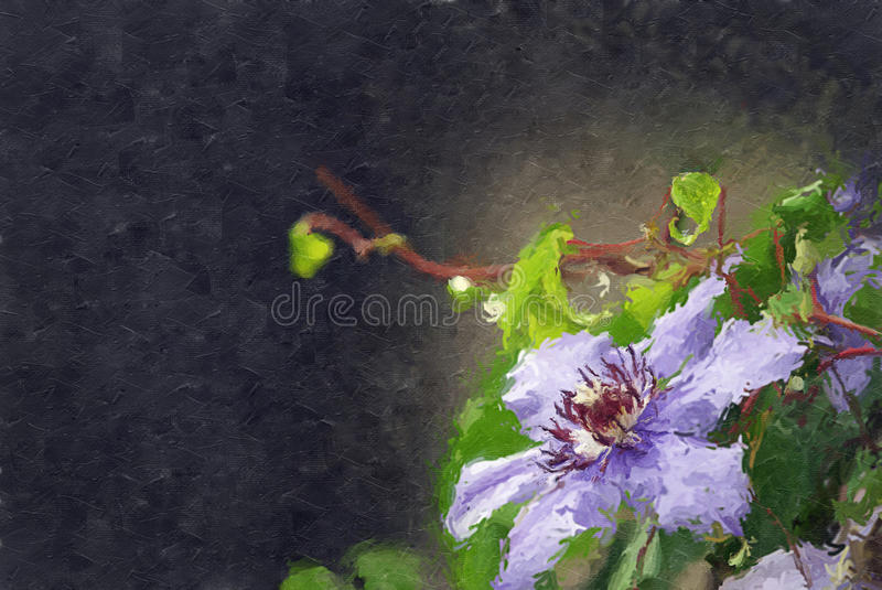 Purpurowy Clematis obrazy royalty free