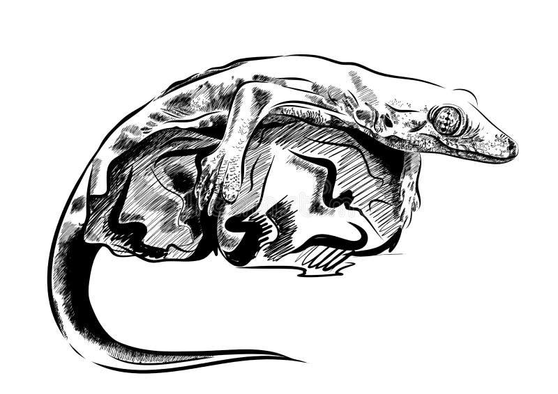 Obrazek z jaszczurka wektorem Grafika na białym tle royalty ilustracja