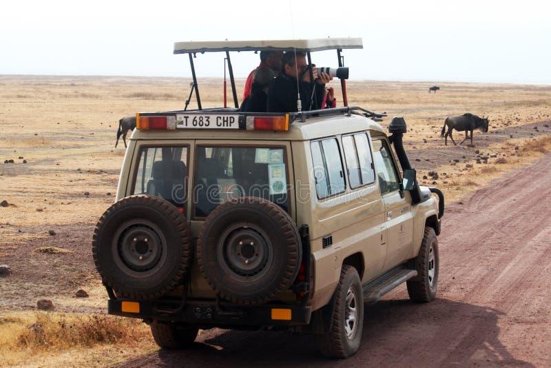 Obrazka safari zdjęcia royalty free