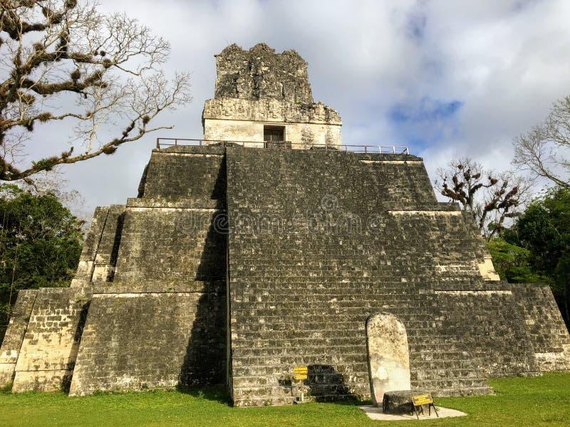 Obrazki Tikal ruiny, antyczne Majskie ruiny głęboko w tropikalnych lasach deszczowych obrazy royalty free