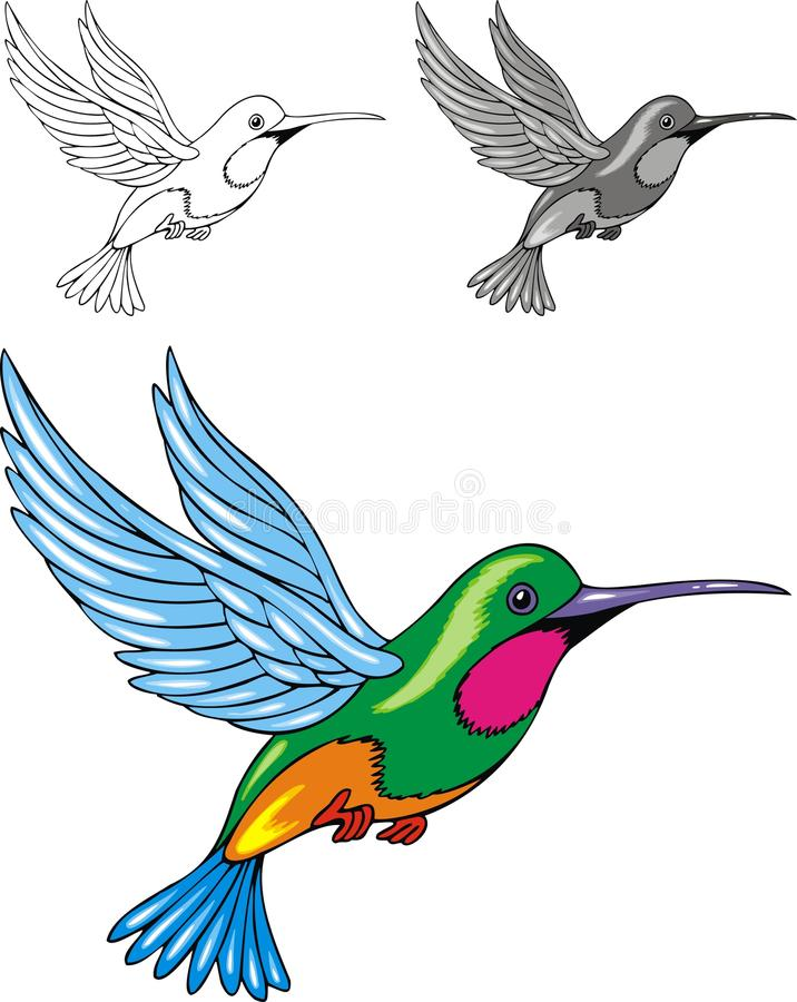 Obrazkowy hummingbird royalty ilustracja
