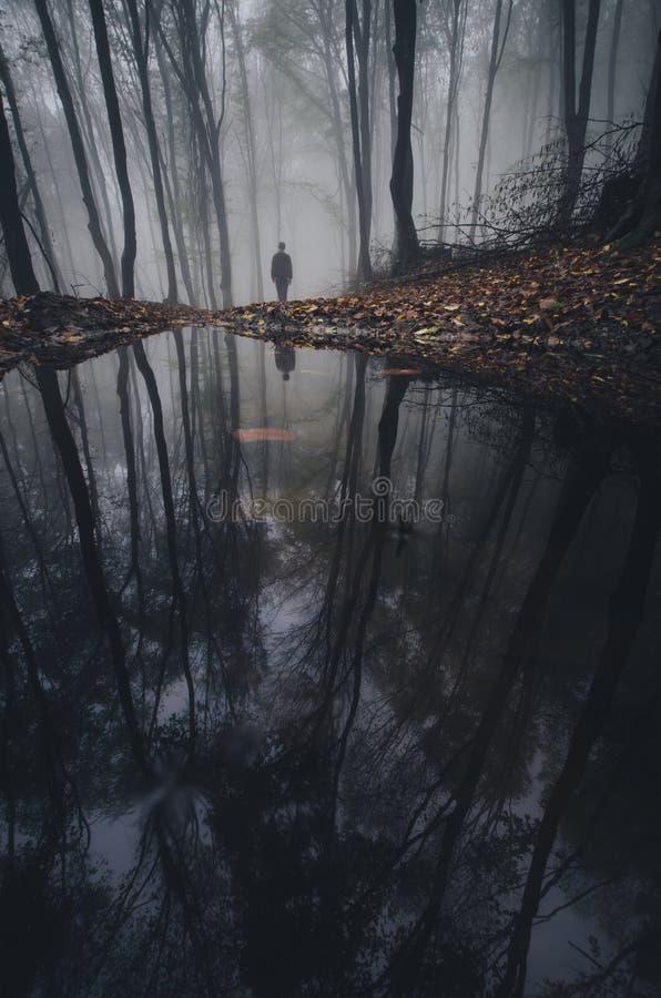 Obsługuje blisko jeziora w tajemniczym lesie z mgłą obrazy royalty free