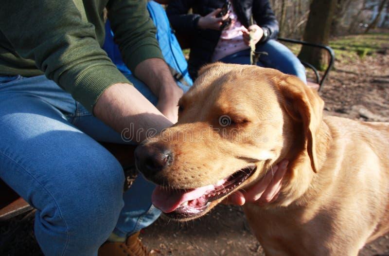Obsługuje cuddling jego psa podczas spaceru w parku obraz royalty free