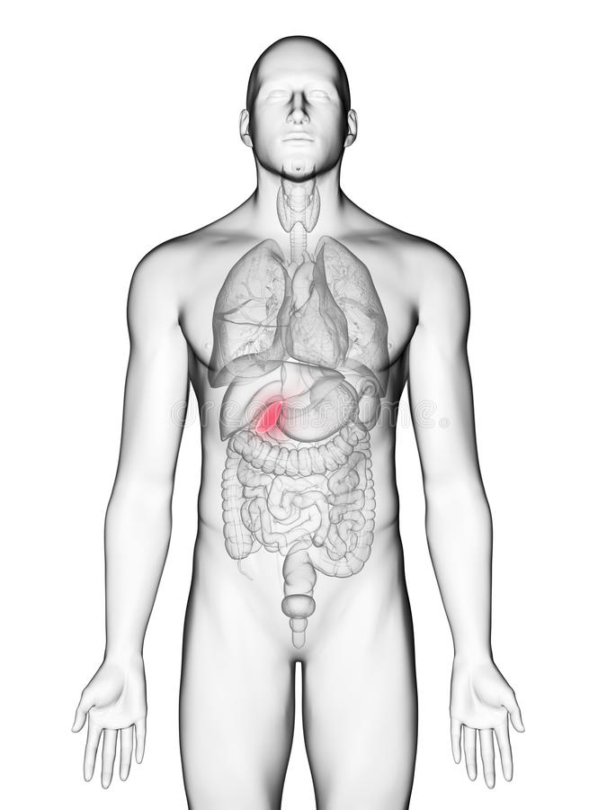 A obsługuje gallbladder royalty ilustracja
